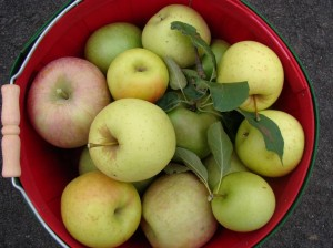 apples, recipes, organic, non-GMO, food,