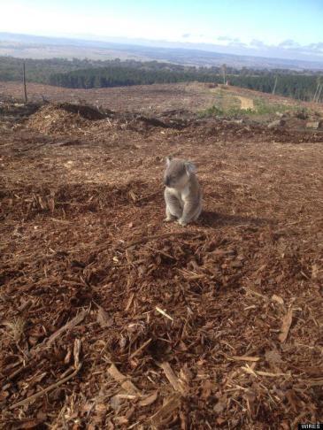 Koala image on soulourpower.org